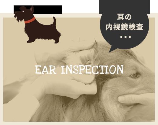 耳の内視鏡検査