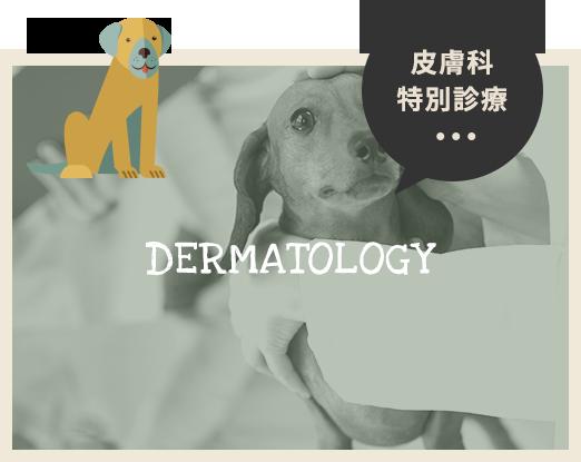 皮膚科特別診療